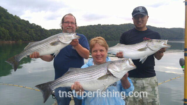 Norris lake jay 39 s striper guide service part 2 for Norris lake fishing